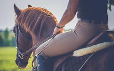 cavallo-civi