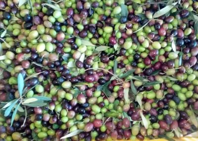 Olive Toscana